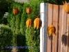 Gartenstecker-Blume